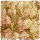 Vintage tulips Royalty Free Stock Photo