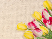 Vintage tulips on canvas. EPS 10 Stock Images