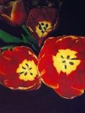 Vintage Tulips Stock Image