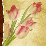 Vintage tulips polka dot template. EPS 10 Stock Images