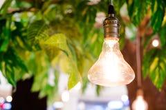 Vintage tungsten lightbulbs hanging on tree with bokeh backgroun Stock Image