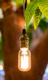 Vintage tungsten lightbulbs hanging on tree with bokeh backgroun Stock Photography