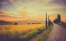 Vintage tuscan landscape Royalty Free Stock Photography