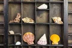 Vintage type case. Original brown vintage type case with sea shells stock photography