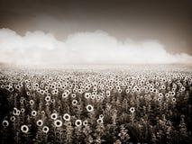 Vintage ukrainian field. In black tone Stock Photos