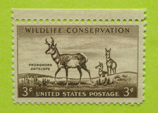 Vintage USA postage stamp. A vintage United States unused postage stamp of the Wildlife Conservation Royalty Free Stock Photography