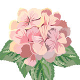 Vintage Vector Card with Watercolor Geranium flowers Royalty Free Stock Photography