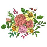 Vintage vector floral composition. With flowers, buds and leaves of red roses and yellow narcissus, imitation of engraving, hand drawn design element Royalty Free Stock Photos