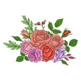 Vintage vector floral composition. With flowers, buds and leaves of roses, imitation of engraving, hand drawn design element Stock Images