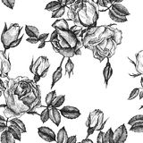 Vintage vector floral seamless pattern Stock Photography