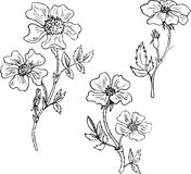 Vintage vector floral set. Of brier flowers, hand drawn design elements Stock Photography