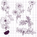 Vintage vector floral set. Of brier flowers, hand drawn design elements Royalty Free Stock Photo