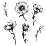 Vintage vector floral set Royalty Free Stock Photos