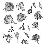 Vintage vector floral set Stock Images