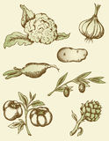 Vintage vegetables stock photography