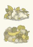 Vintage vegetables and fruits. Illustration is monochromicon the light yellow background. Can be used as template for food labels. EPS 10.0. RGB. This Royalty Free Stock Image