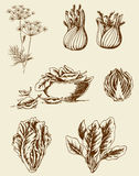 Vintage vegetables Stock Photos