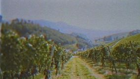 Vintage VHS film effect over vineyard walking inspecting fields. Owner POV personal perspective as he walks in the winery vineyards early int e morning in stock video footage