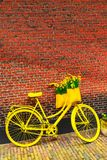 Vibrant yellow bicycle flowers, rustic brick wall Stock Photo