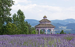 Vintage Victorian Gazebo in Lavender Flowers Stock Photos