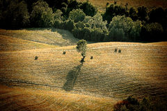 Vintage view of after harvest fields, Toscany, Italy Stock Photo