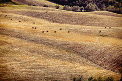 Vintage view of after harvest fields, Toscany, Italy Stock Image