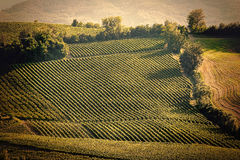 Vintage view hills of Tuscany with vineyard Stock Images