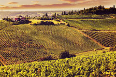 Vintage view hills of Tuscany with vineyard Royalty Free Stock Photo