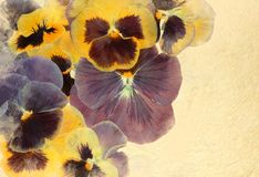 Vintage viola flowers background Royalty Free Stock Photography