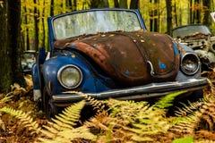 Vintage Antique Car - Junkyard in Autumn - Abandoned Volkswagen Type 1 / Beetle - Pennsylvania stock photography