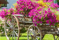 Vintage wagon decorated with annual flowers III Stock Images