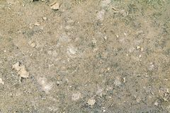 Vintage wall cement old texture damage floor concrete for background.  royalty free stock images