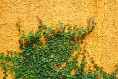Vintage wall. And green plant stock images