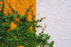 Vintage wall. And green plant stock image