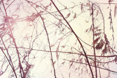 Vintage wall. Pink vintage wall with small tree Royalty Free Stock Images