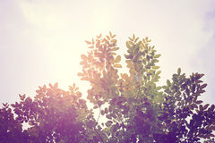 Vintage wall. Pink vintage wall with small tree Royalty Free Stock Photography