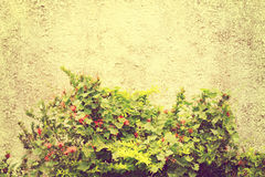Vintage wall. Pink vintage wall with small tree Royalty Free Stock Photos