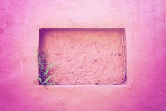 Vintage wall. Pink vintage wall with small tree Royalty Free Stock Image