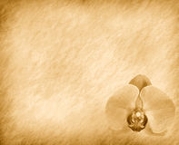 Vintage wallpaper background Royalty Free Stock Photography
