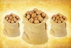 Vintage walnut background Stock Image