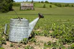 Vintage water can on dry field Stock Images
