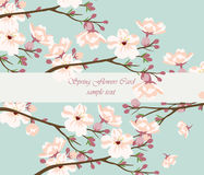 Vintage Watercolor Background with Blooming Cherry Flowers Stock Photo