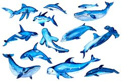 Vintage watercolor elements in a nautical theme. Hand drawn whale, shark, dolphin, killer whale, fish, beluga