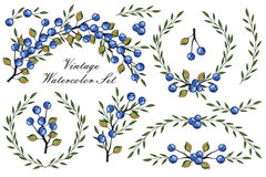 Vintage Watercolor set.Blue berrie, branches Stock Photography