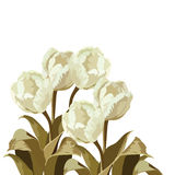 Vintage Watercolor White Tulips bouquet flowers Stock Photo