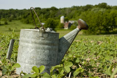 Vintage watering can Royalty Free Stock Photo