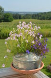 Vintage watering can of flowers with a countryside background Royalty Free Stock Photo