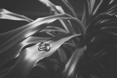 Vintage wedding rings on a plant Stock Images