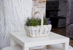 Vintage white basket Stock Photos