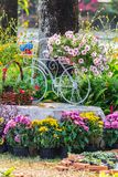 In home cozy garden on summer. Royalty Free Stock Image